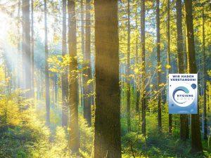 Mit Sonne durchfluteter Wald zur Symbolisierung des Umweltschutzes durch clean.de