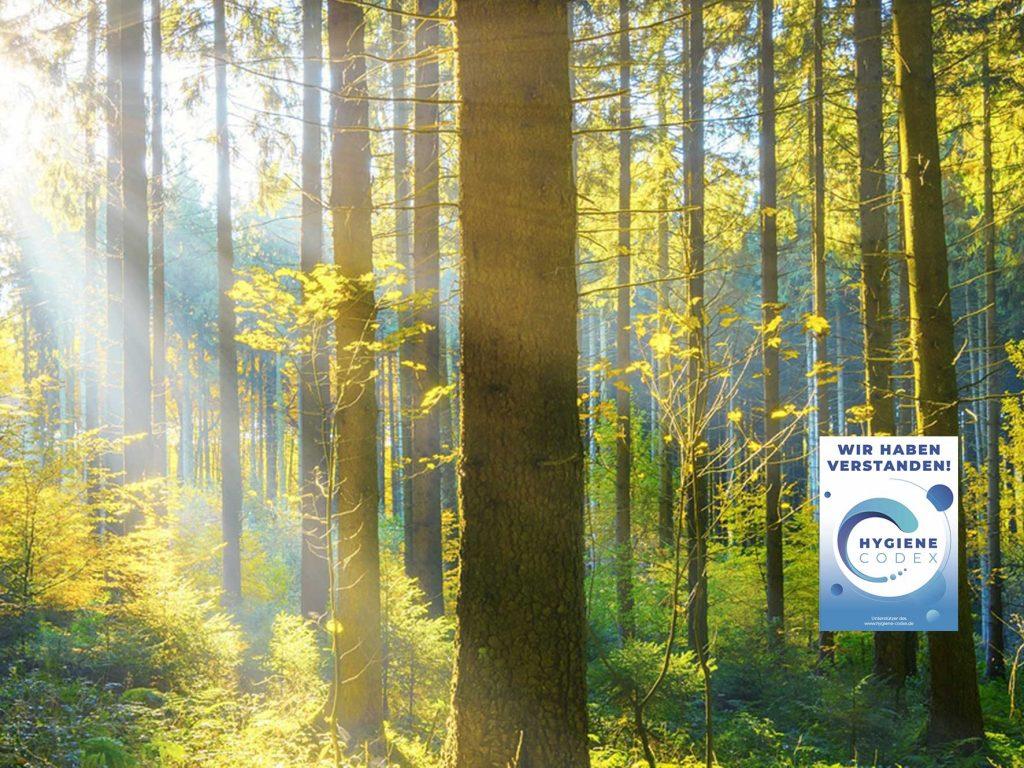 Professionelle Gebäudereinigung - Mit Sonne durchfluteter Wald zur Symbolisierung des Umweltschutzes durch clean.de