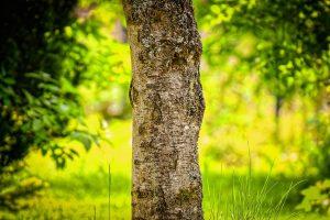 Cradle to Cradle bei der Reinigung Baum als Symbol